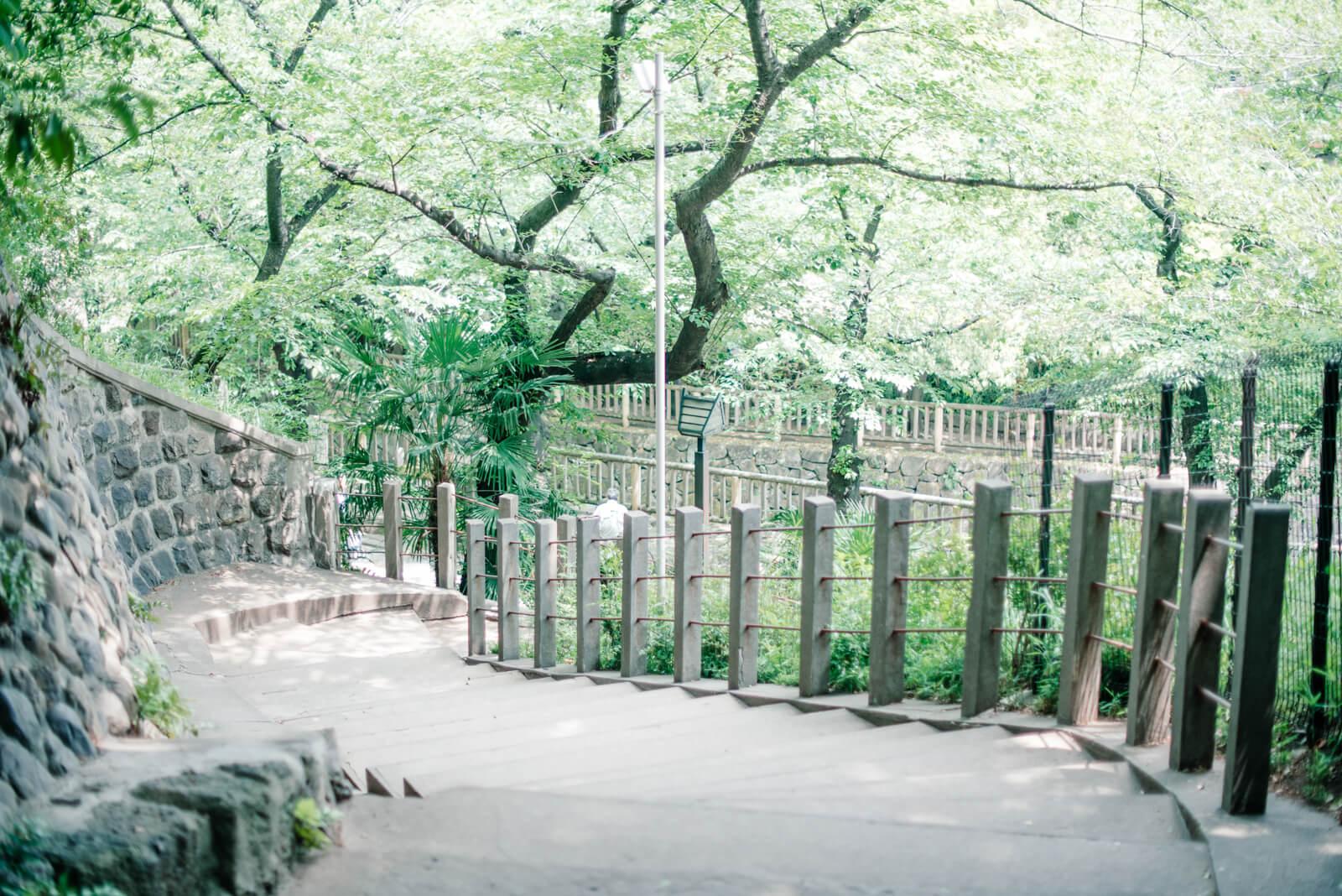 王子神社 階段 緑道