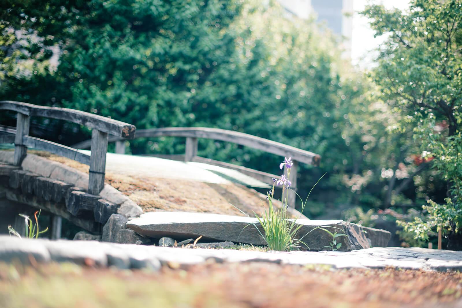 湯島天満宮 湯島天神 湯島神社 学問 庭園
